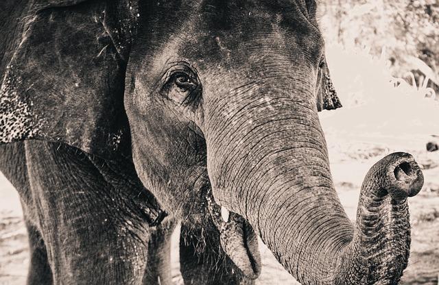 В США пластические хирурги на 6 недель превратят нос женщины в «слоновий хобот»