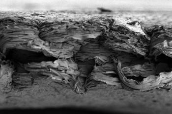 Еще одна новая методика «выращивания» кости, чтобы восстановить ее повреждения или врожденные дефекты