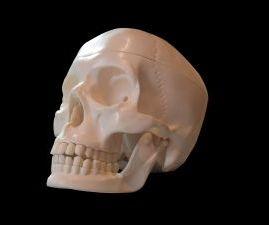 Разработаны термочувствительные гелевые скаффолды для восстановления костей черепа