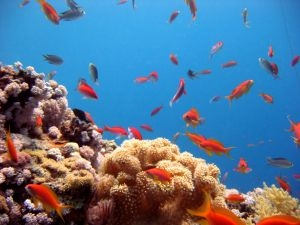 Костные трансплантаты можно улучшить с помощью кораллов
